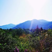 Кавказские горы :: Виктория Селиванова