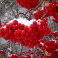 Под снегом осени. :: Алексей Хаустов