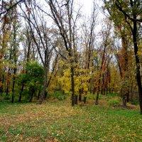 Осень в городе... :: Тамара (st.tamara)