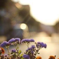 flowers :: Айнур Алиева