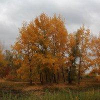 Промозглая осень :: Dr. Olver  ( ОлегЪ )
