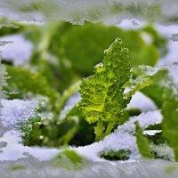 первое дыхание зимы :: Сергей Розанов