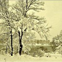 Снежный октябрь :: galina tihonova