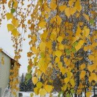 Встретились осень с зимою:) :: Лидия Мамаева