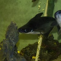 аквариум :: Юлия Федорова