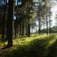 В лесу :: Марина Корепова