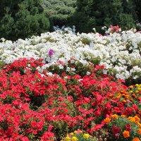 Цветы.... :: Mihail Chiriac