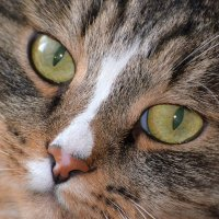 Чеширский кот :: Дмитрий Боргер