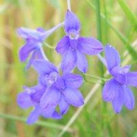 цветы :: Ирина Торгач