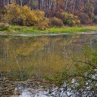 Осень :: Ирина Шарапова