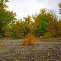 Осенний парк... :: Сергей Петров