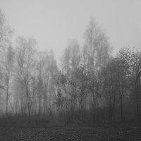 Осенний туман :: Алексей Хвастунов