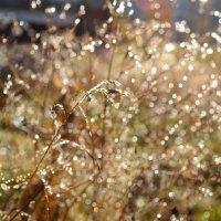 Солнечный фейерверк :: Ольга