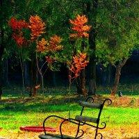 осень в парке :: Александр Корчемный
