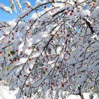 В зимнем саду :: Нина северянка
