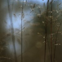 Травы... :: Валерия  Полещикова