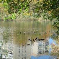 В городе дикие утки... :: Тамара (st.tamara)