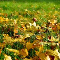 Осеннее покрытие... :: *MIRA* **