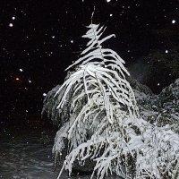 Первый снег #1 :: Виктор Четошников