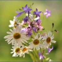 полевые цветы :: Dorosia safronova