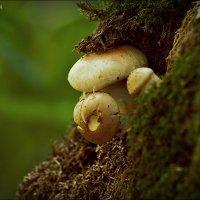 подозрительные грибочки :: Дмитрий Анцыферов