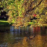 В осеннем пруду :: Alexander Andronik