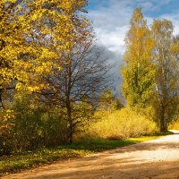 Береза y дороги :: Valdis Veinbergs