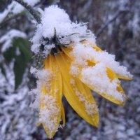 первый снег :: Валерия Яскович