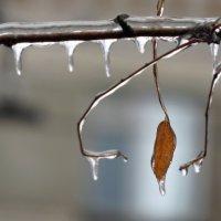 Ледяной дождь :: Ната Волга