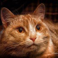 Сказка кот))) :: סּﮗRuslan HAIBIKE Sevastyanovסּﮗסּ