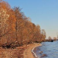 Осень на берегу. :: Галина .
