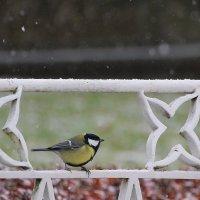 Все рады первому снежку... :: Tatiana Markova