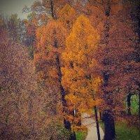 Вот так мне видится  осень в октябре... :: Tatiana Markova