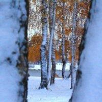 Взгляну на осень сквозь зимы окно :: Татьяна Ломтева