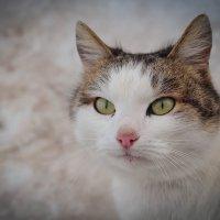 Кошка :: Ирина
