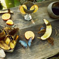 Столовая бабочек :: Владимир Болдырев