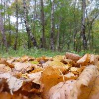 как быстро б...лин, опали листья))))))))) :: Oxi --
