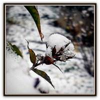 Первый снег #2 :: Михаил Малец