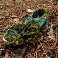 Башмачёк в лесу :: Ирина Лапина