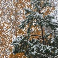 Первый снег 20.10.14г :: Диана Задворкина