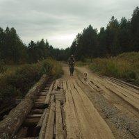 прогулка о лесу... :: Марат Шарипов
