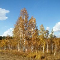 Осень :: alemigun