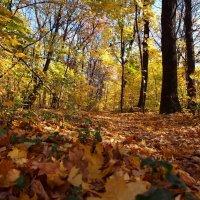 Осенний лес :: Александр Резуненко