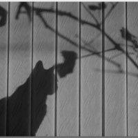 Закат рисует на окне... :: Елена Миронова