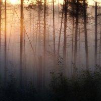 Рассвет на болоте :: Юрий Цыплятников