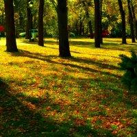 Осенний ковёр :: Григорий Кучушев