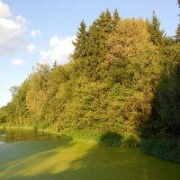 Погибший пруд :: Наталья Гусева