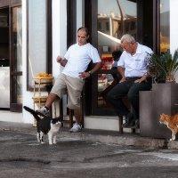 Удовольствие для Киренейских кошаков :: Anna Lipatova