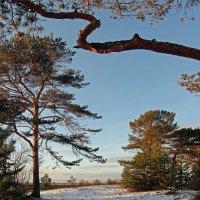 Северодвинск. Белое море, сосновый бор на берегу :: Владимир Шибинский