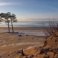 Северодвинск. Белое море, берег :: Владимир Шибинский